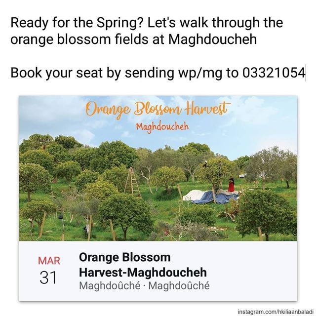HkiliAanBaladi LebanonStories spring orange orangeblossom blossom ...