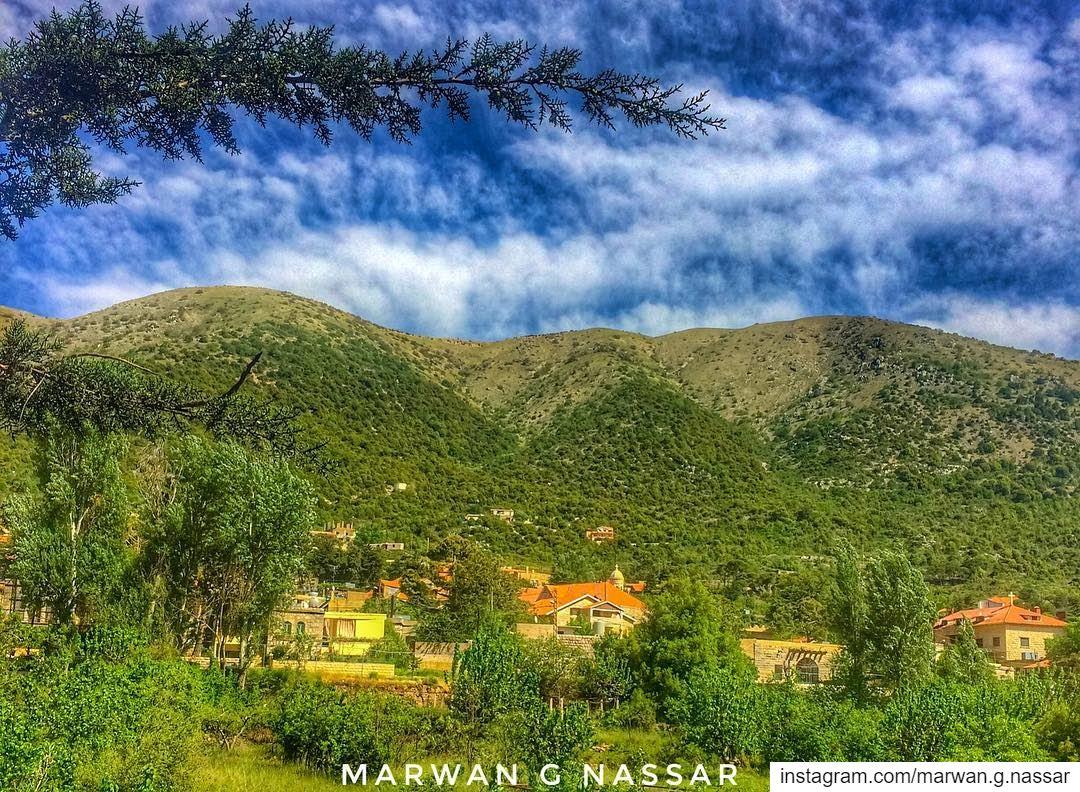 Adopt the pace of nature.. Her secret is patience.....📍Maaser El Shouf, (Maaser El Shouf Cedar Reserve محمية ارز معاصر الشوف)