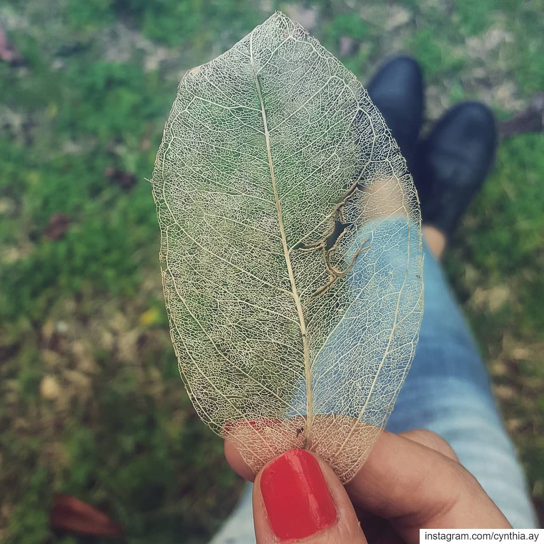 It's all about details! 🍂 fragile leaf art details nature ...