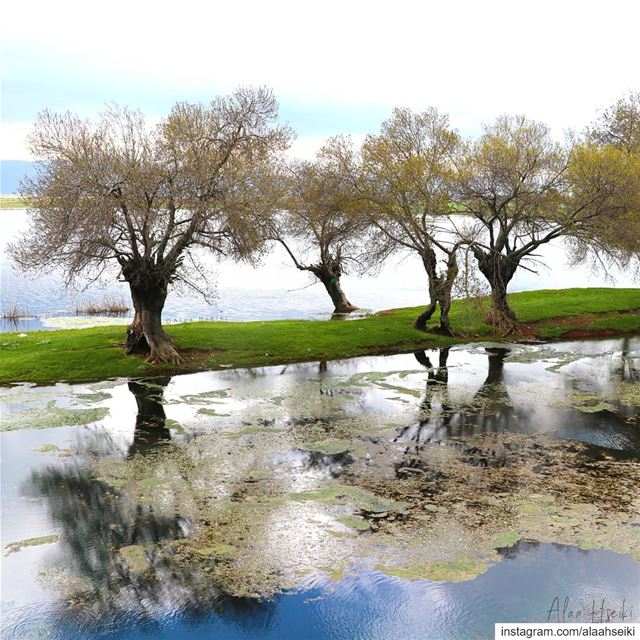 Reflections ✨... Hseiki Lebanon beirut nature photography beqaa ... (`Ammiq, Béqaa, Lebanon)