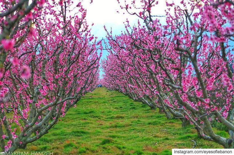 قلة من يفهم أن جنون الربيع إنما هو وليد حزن الخريف.🌸 Credits to @makram_ha (Beqaa Governorate)