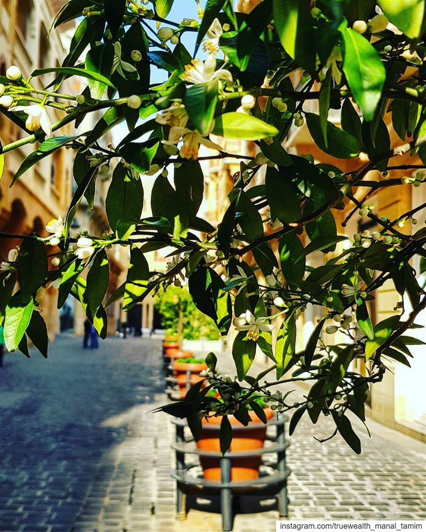 This is when October runs on Spring's Thursday..📍Orange blossom🍃في بيرو (Downtown Beirut)