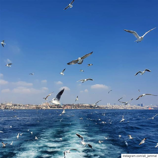 istanbul turkey bosphorus spring spirits spirit me igers igdaily ... (Istanbul, Turkey)