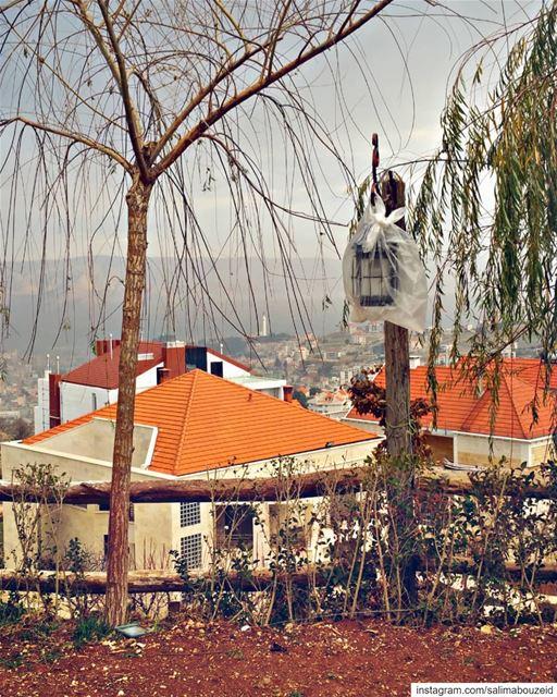 كلما اقتفيتَ خطاكفي المدن التي أدخلها للمرة الأولىعثرتَ على شيء فيكلم أك (Zahlé, Lebanon)