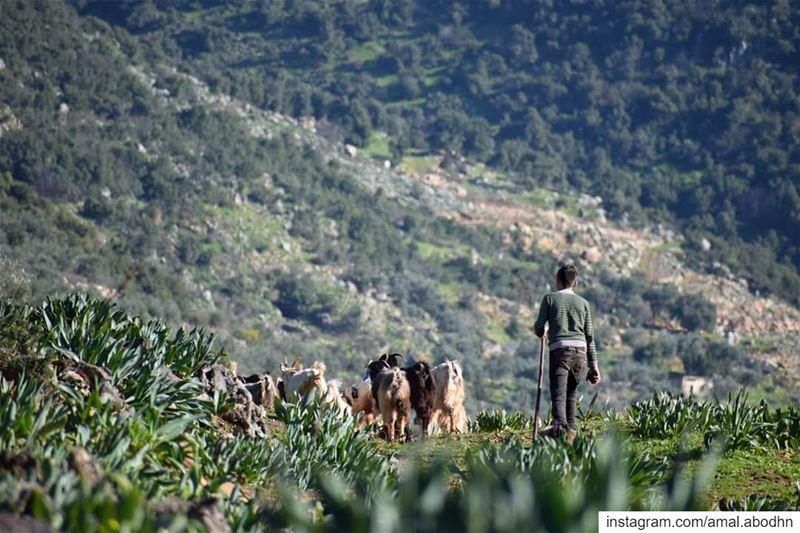 النهاية تتوج الأعمال.... 👌 ..... lebanon photography ...