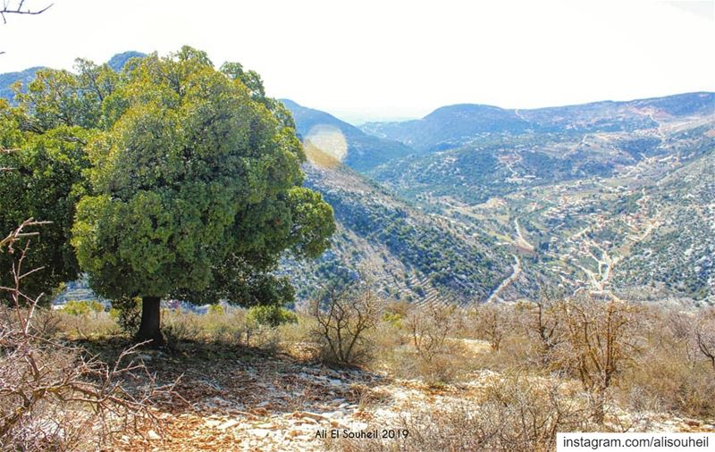 tb southlebanon aramta tree mountains nature colorful ... (`Aramtá, Al Janub, Lebanon)