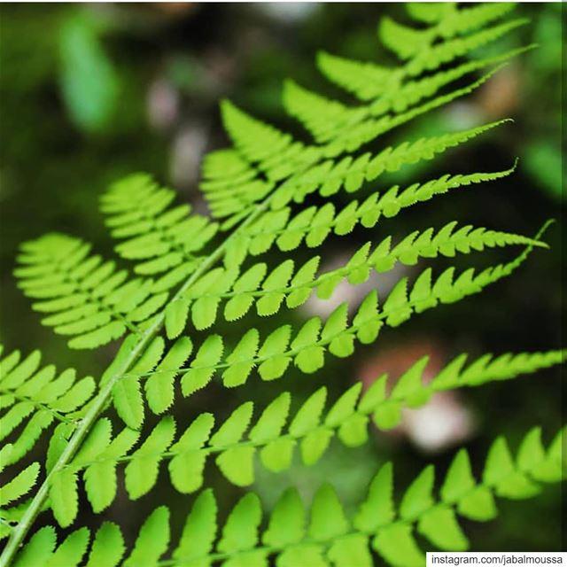 Green Sundays. JabalMoussa unesco unescomab livelovejabalmoussa ... (Jabal Moussa Biosphere Reserve)