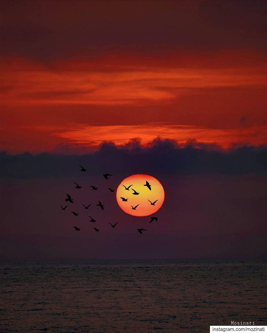 The sun shines not on us but in us .. ===================================== (Saïda, Al Janub, Lebanon)