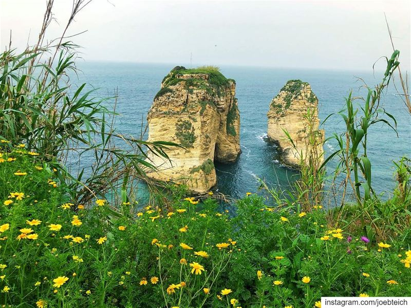 Spring: a lovely reminder of how beautiful change can truly be💐 nature... (Ar Rawshah, Beyrouth, Lebanon)