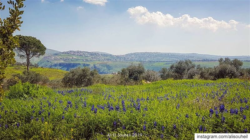 tb southlebanon spring flowers blue sky clouds mountains nature ... (Yohmorelchakif)