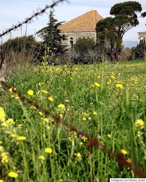 🇱🇧🇧🇷 Os campos do Líbano começam a florescer com a chegada da... (Marjayoûn, Al Janub, Lebanon)