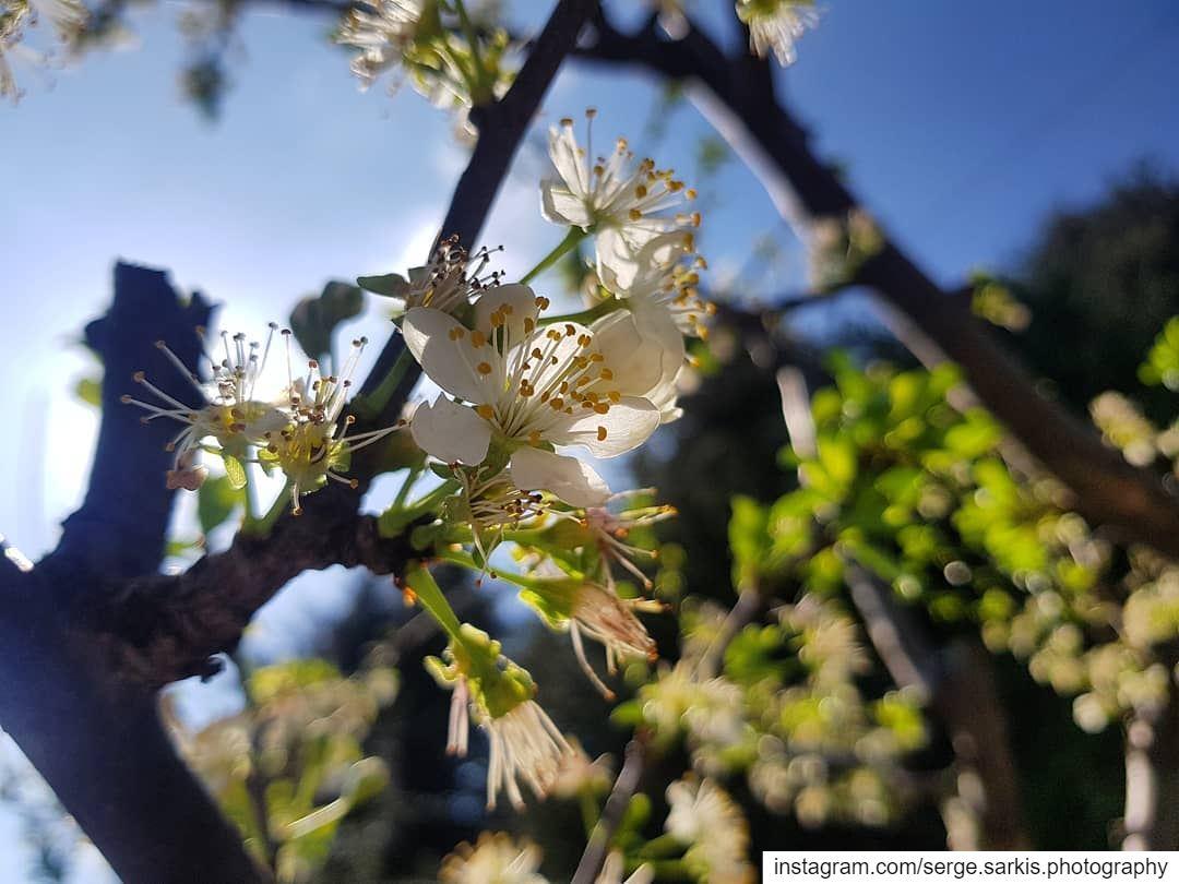 🌸🌸- sergesarkisphotography photographer photography photo rose ...