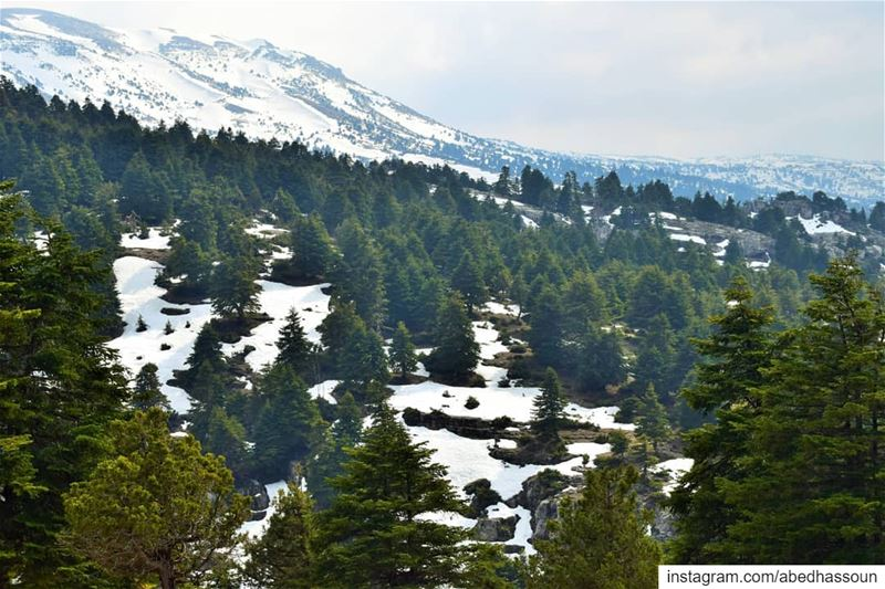 Good morning❄🌲❄............. LiveLoveAkkar عكار طبيعة ... (El Qammoûaa)