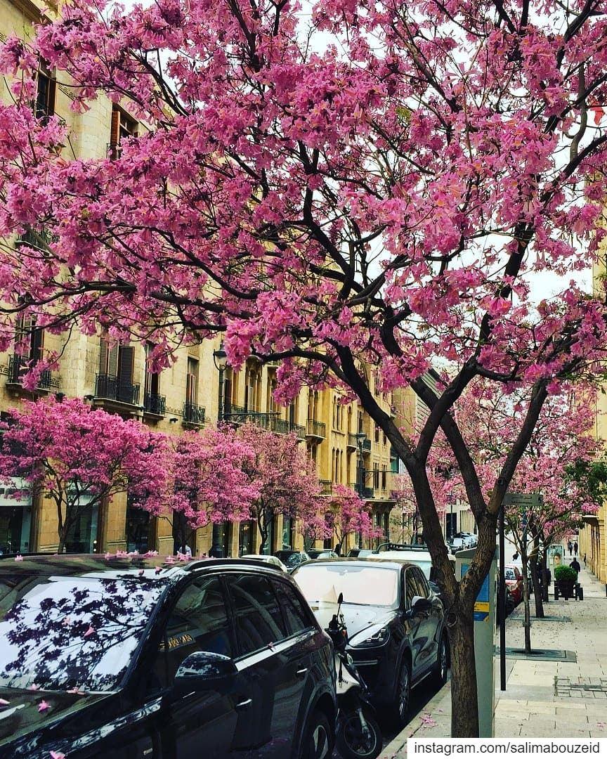 Pinky Beirut ❤------------------------------------------------------------ (Lebanon)