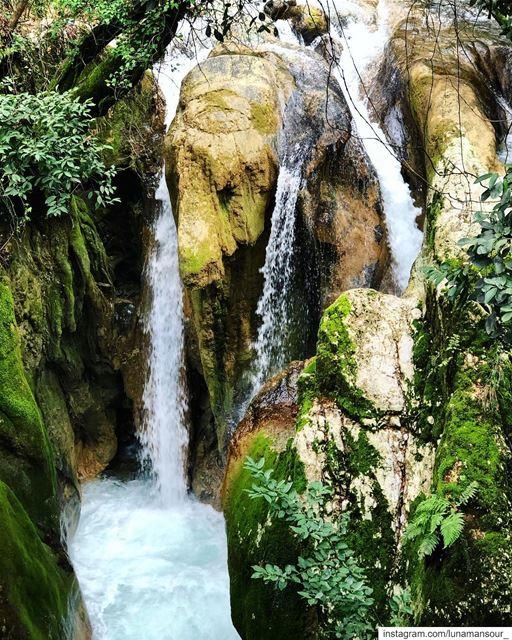 Paradise.... (Jdaïdet Ech Choûf, Mont-Liban, Lebanon)