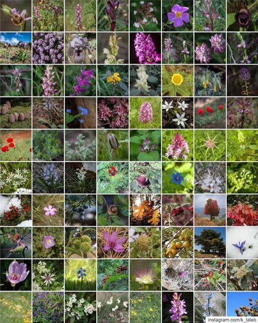 *مجموعة الأزهار والأشجار والنباتات التي وثقتها درب_عكار تخطت ال ٢٠٠ نوع*م