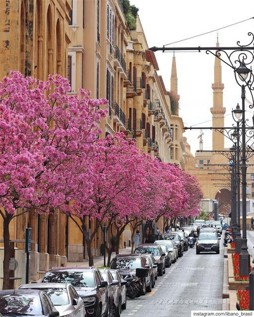 🇱🇧🇧🇷 Cerejeiras anunciam a chegada da primavera no Líbano. Foto de @bud (Downtown Beirut)