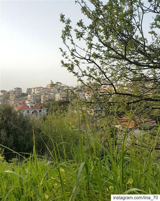 يا طير ig_respect ig_lebanon instaamici insta_mood ptk_nature ... (Aley)