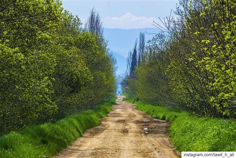 Spring way 🌳----- nature naturephotography landscape earthpix ... (West Bekaa)
