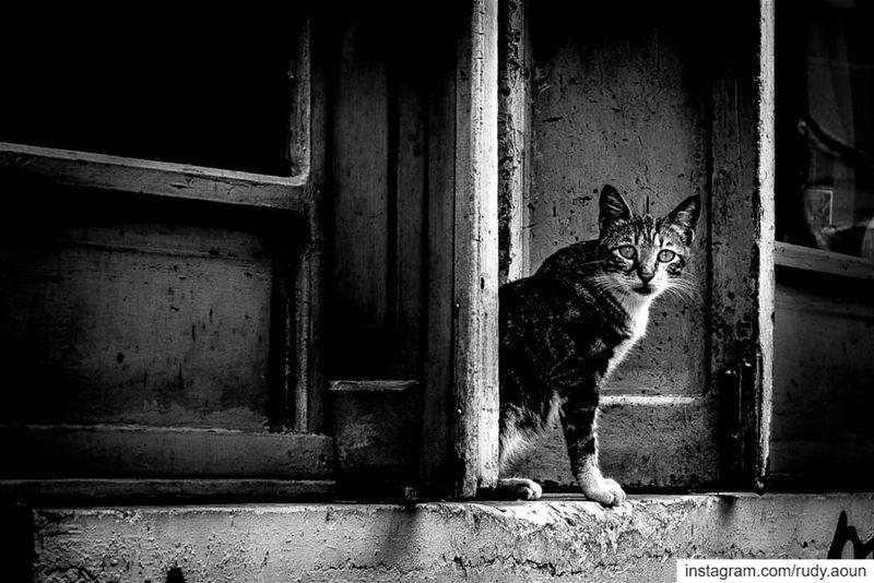© Rudy Aoun love photography lebanon instalove intsapic picoftheday... (Beirut, Lebanon)