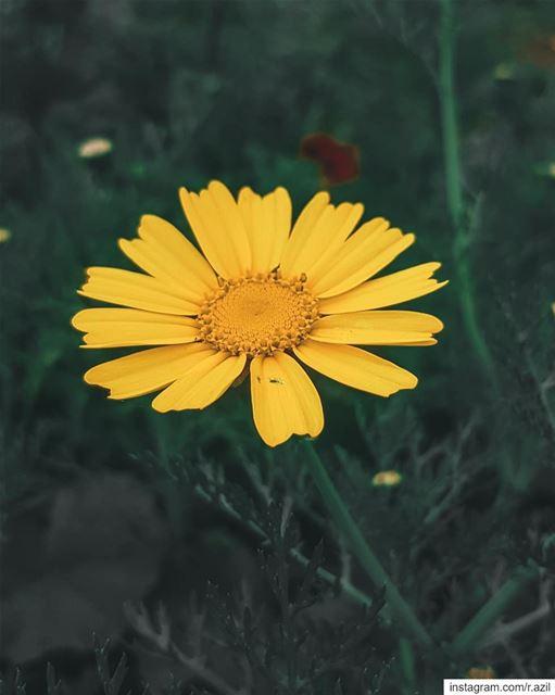 spring mawar bungamatahari sunflower 🌼 🌻 ...