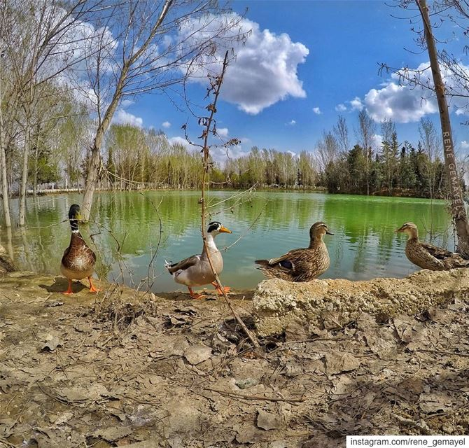 Ruunn run 🦆🦆..... i don't wanna be a nugget... LebanonTimes ... (West Bekaa)