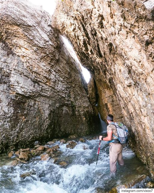 Hall of giants... hikingtrails hiking hikinglife exploretocreate ... (Inside You)