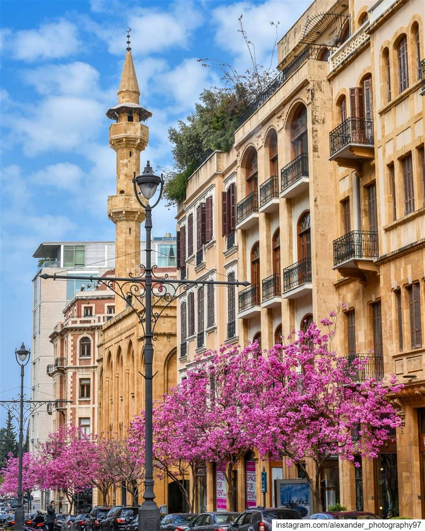 Spring in Lebanon - The blooming streets of Beirut Downtown 🌺🌺 lebanon ... (Beirut, Lebanon)