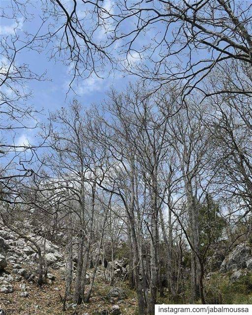Wishing you all a Blessed Sunday. JabalMoussa unesco unescomab ... (Jabal Moussa Biosphere Reserve)