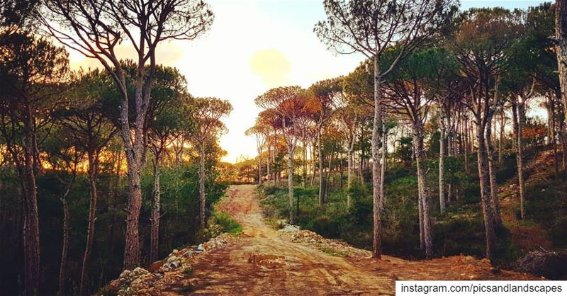 I see my path, but I don't know where it leads. Not knowing where I'm... (Mount Lebanon Governorate)