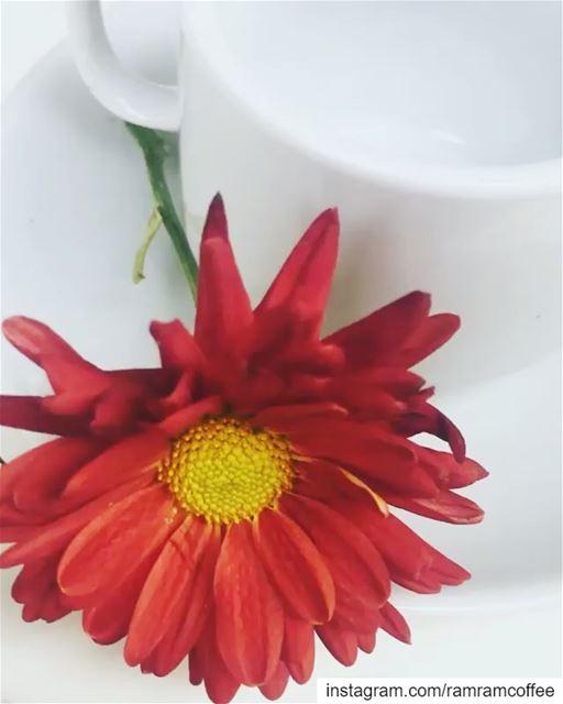 بحبك يا لبنان يا وطني .... ramramcoffee turkishcoffee ...