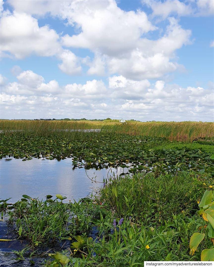 Swamps are beautifully scary 🐊🛶 myadventureslebanon wildlife ... (Florida)