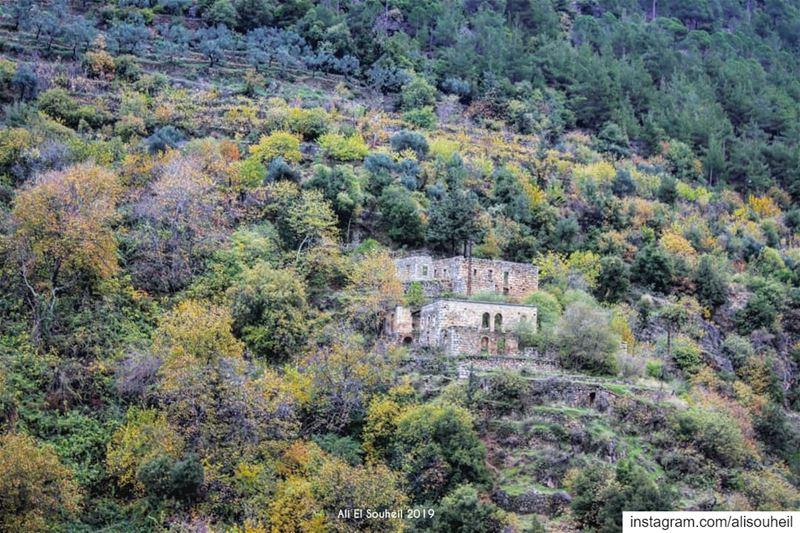 tb qannoubine qadisha holy valley trees building northlebanon ... (Ouâdi Qannoûbîne, Liban-Nord, Lebanon)