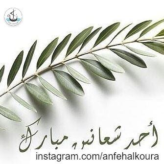 شعنينة مباركة🌿Happy Palm Sunday 🌿 palmsunday sundaypalm ... (Lebanon)