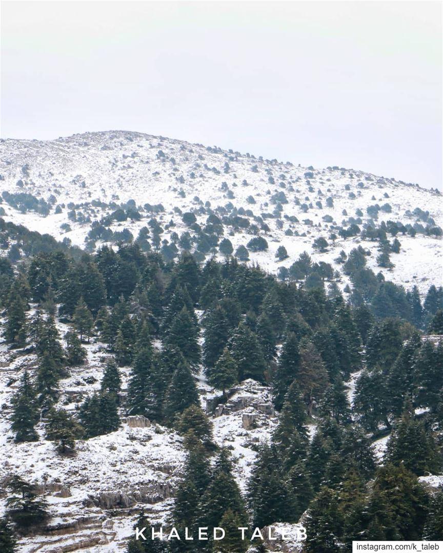 طبقة رقيقة من الثلوج، ورياح باردة شديدة ذكرتنا بالشتاء الذي قلنا عنه أنه مض