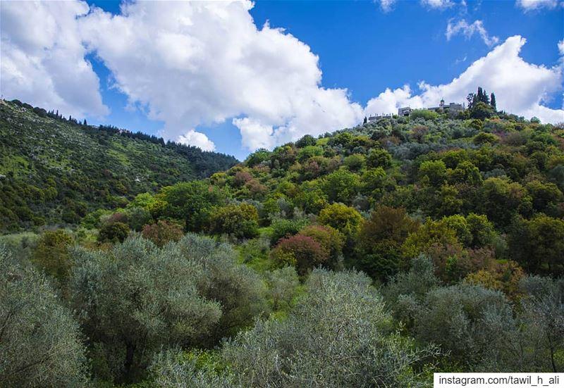 Spring is Calling 🌳🌻➡️------- nature landscape ... (Khirbet Selm)