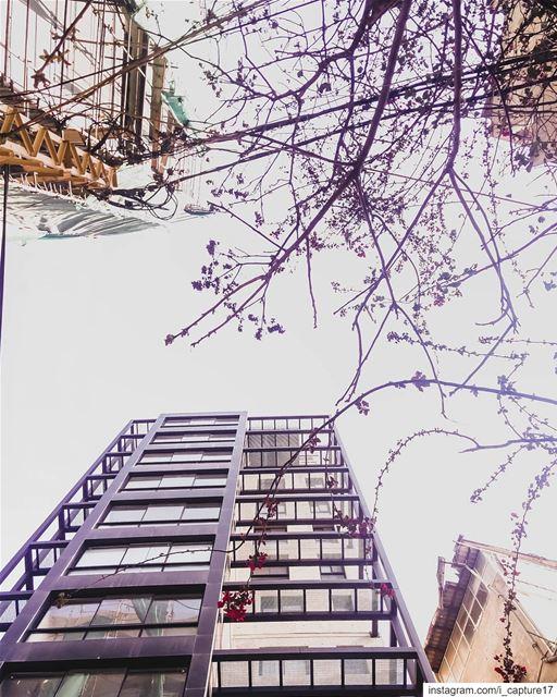 しᝪᝪᏦ ᑌᑭ •••• lebanon beirut ashrafye perspective spring flowers ... (Ashrafieh)