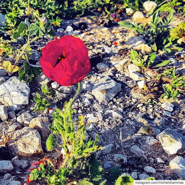 Lebanon Chekka ... (Chekka)