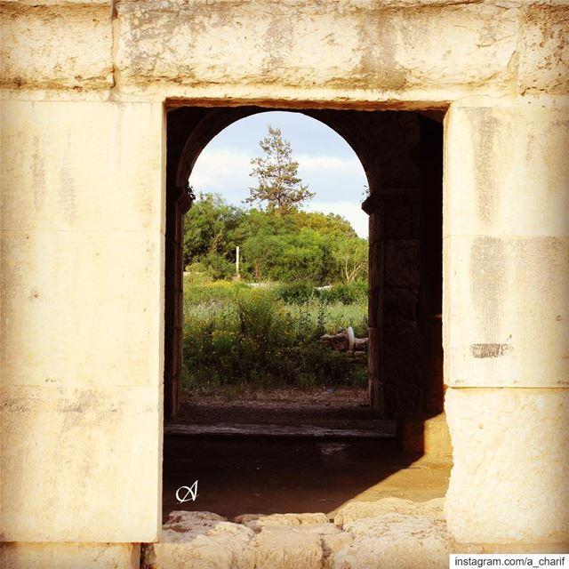 The frame frame nature tree stones history citadel tyre ... (Tyre, Lebanon)