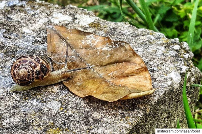 snail escargot nature lebanoninapicture ptk_lebanon livelovebeirut ... (Amioûn, Liban-Nord, Lebanon)