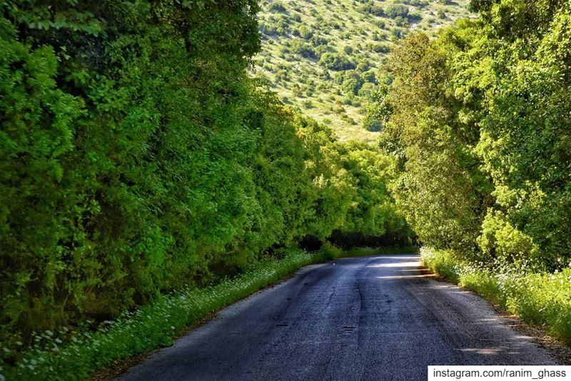ᵗᵘᶰᶰᵉˡ ᵒᶠ ᵍʳᵉᵉᶰ ᵃᶰʸᵒᶰᵉ ? ........ viewsoflebanon super_lebanon ... (Wadi Al Hujair)