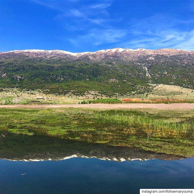 Reflexion ammiq love lebanon picoftheday photography photooftheday ... (Ammiq Reserve)
