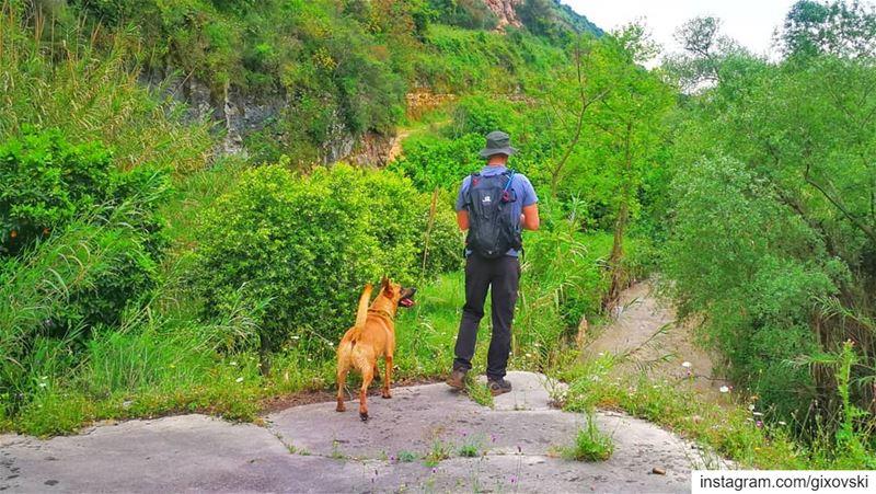 الغابة الخضراء 🌴🌲🌳🌱🌿🍀☘️.. neverstopexploring hiking hike ...