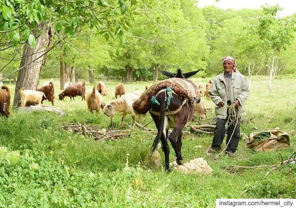 Without labor nothing prospersBy @kansohaidar hermel hermel_city ... (El Hermel, Béqaa, Lebanon)