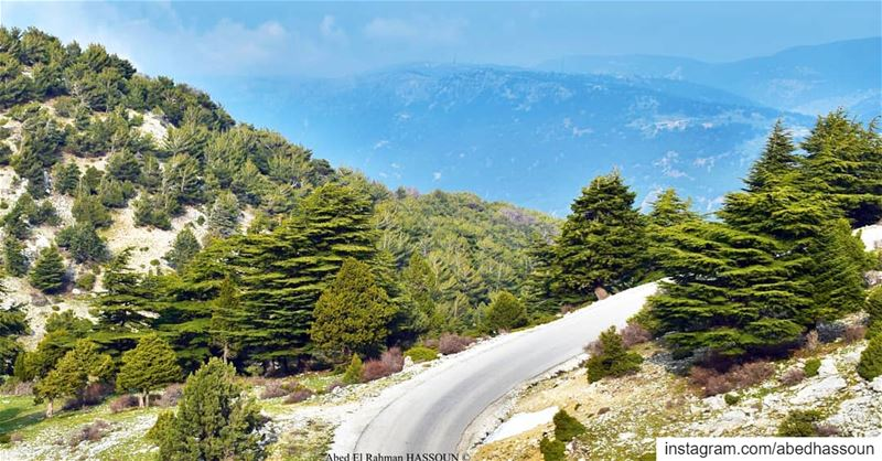 The road to the Northern Cedars 🇱🇧.................... (El Qammoûaa)