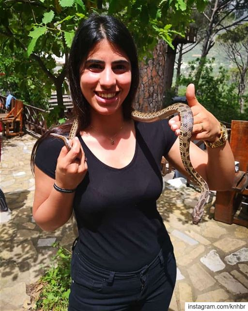🐍@wildexplorerslebanon @lebanese_wildlife snakes ...