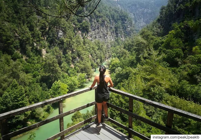 Can't wait to see you again..... (Jabal Moussa Biosphere Reserve)
