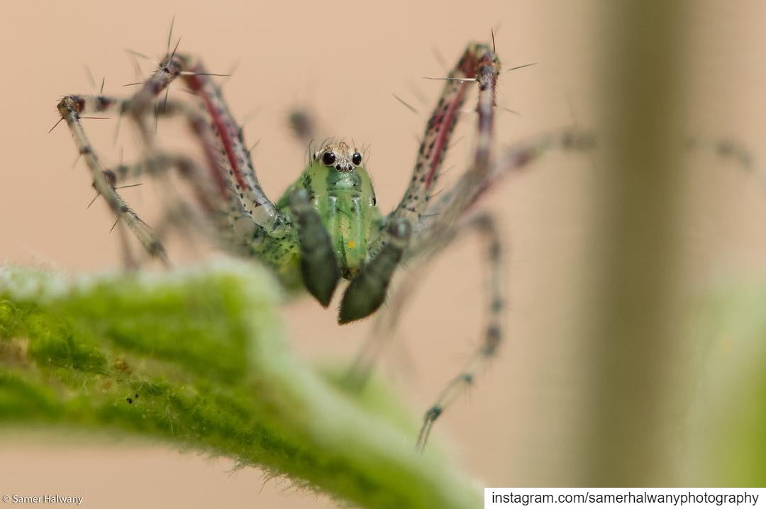 Smile its a spider!...from the tiny world of macro comes the spider with...