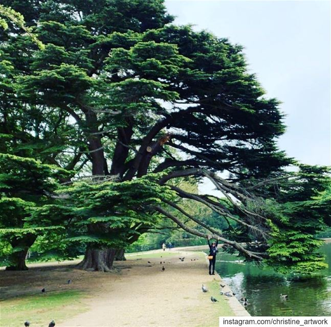 Standing next to A Majestic Cedar Tree 💚 Osterley Park🇬🇧. ... art...