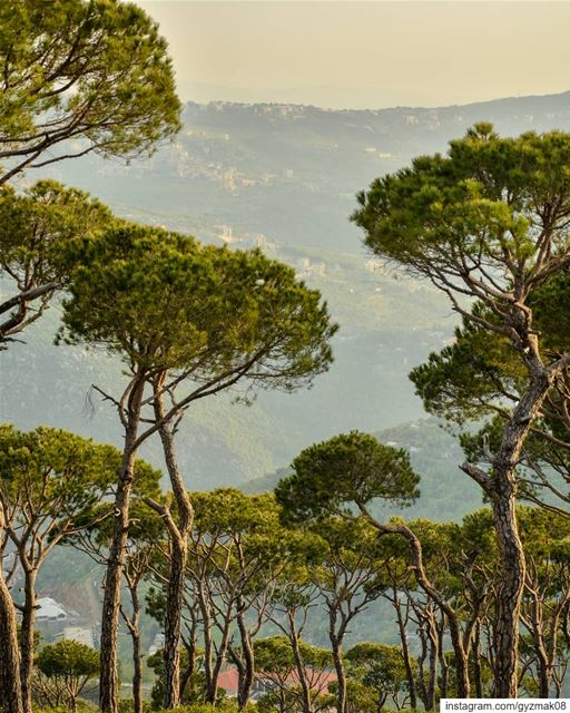 """""""i felt my lungs inflate with the onrush of scenery - air, mountains,... (Lebanon)"""